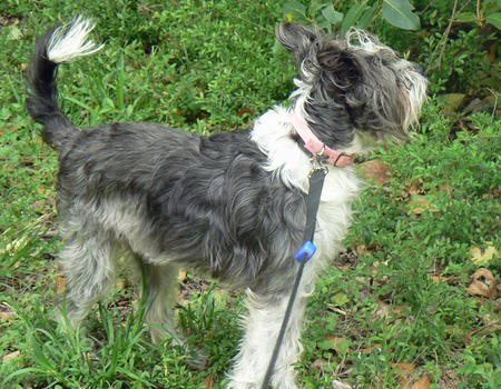 Abigail the Terrier Mix Pictures 762809