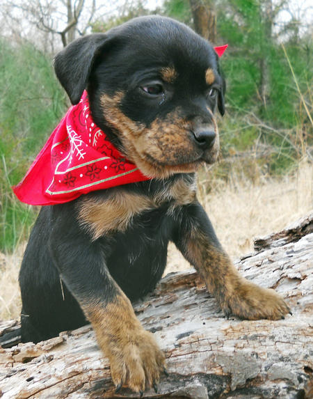 Adoptable Mixed Breed Puppies Pictures 727264