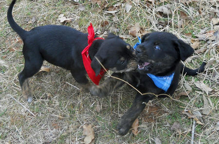 Adoptable Mixed Breed Puppies Pictures 727265