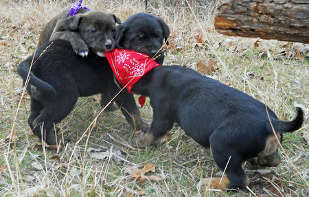 Adoptable Mixed Breed Puppies Pictures 727266