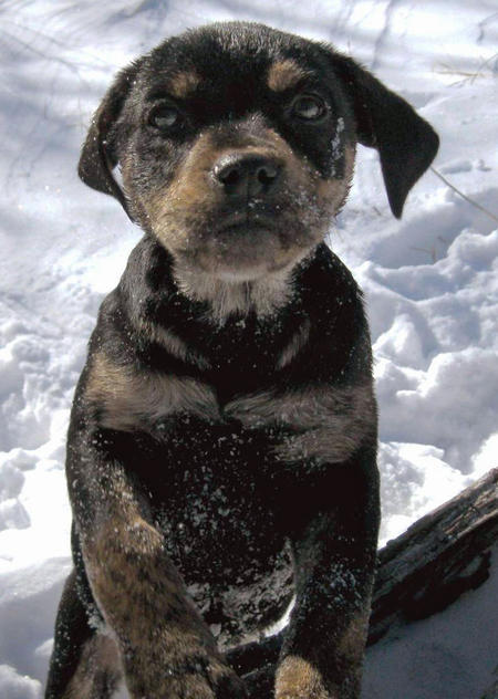 Adoptable Mixed Breed Puppies Pictures 727268