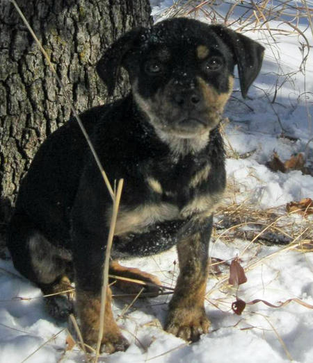 Adoptable Mixed Breed Puppies Pictures 727273