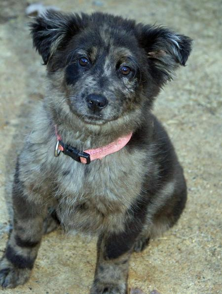 Angel the Chow Mix Pictures 861014