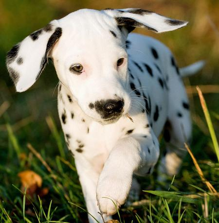 Annie the Dalmatian Pictures 621344