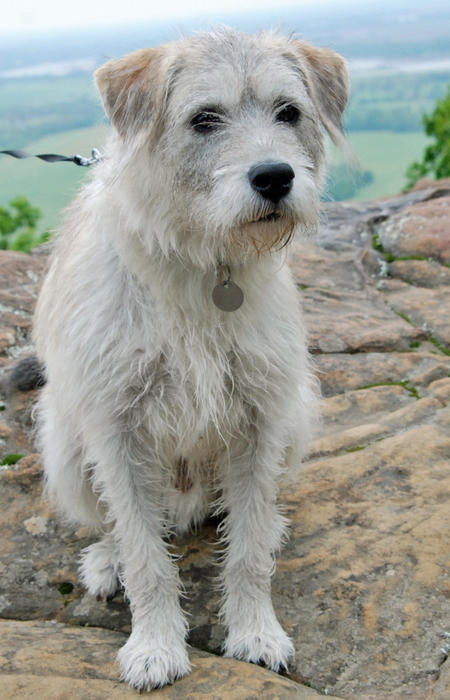 Arty the Terrier Mix Pictures 777268