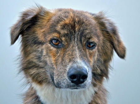 Avon Barksdale the Mixed Breed Pictures 912437