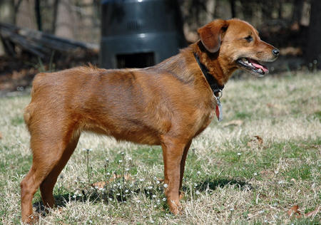 Bailey the Dachshund Mix Pictures 888157