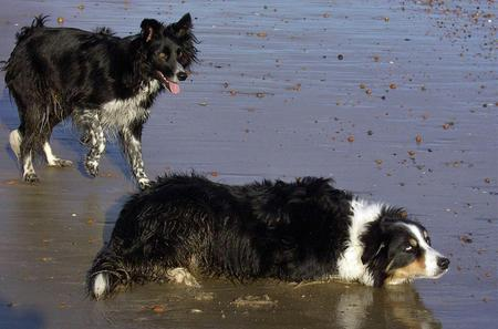 Barnie the Border Collie Pictures 567338