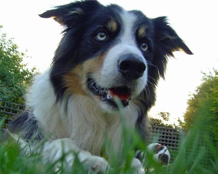 Barnie the Border Collie Pictures 567339