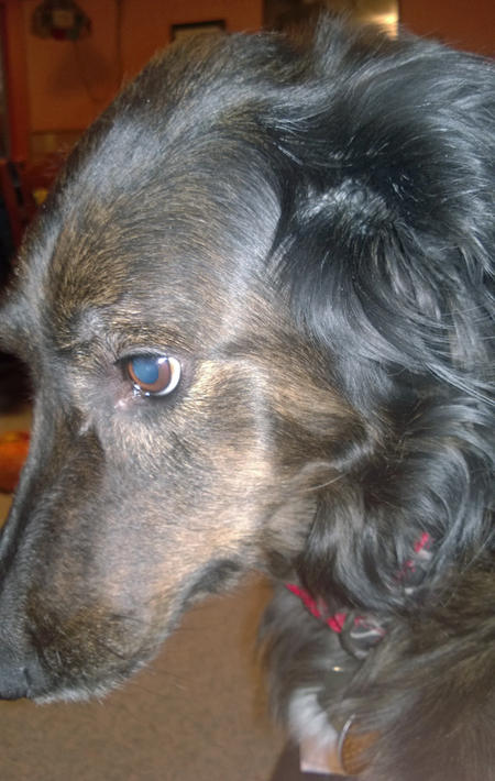 Baylie the Mixed Breed Pictures 1036873