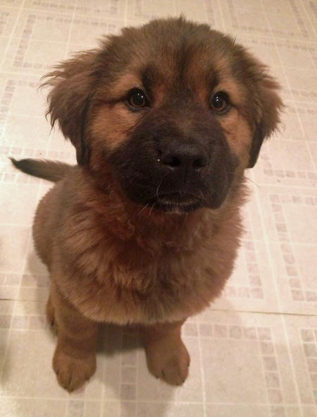 Bear the Mixed Breed Pictures 1059667