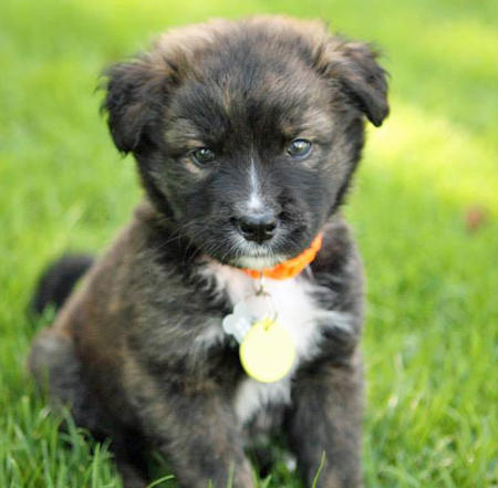 Berkeley the Border Collie Mix Pictures 985331