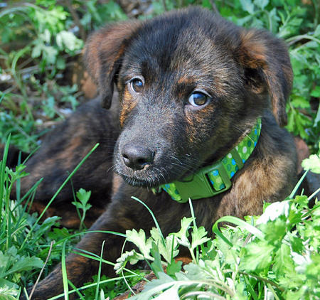 Bernice the Mixed Breed Pictures 889683