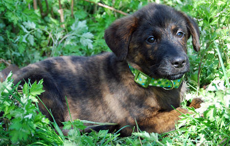 Bernice the Mixed Breed Pictures 889684