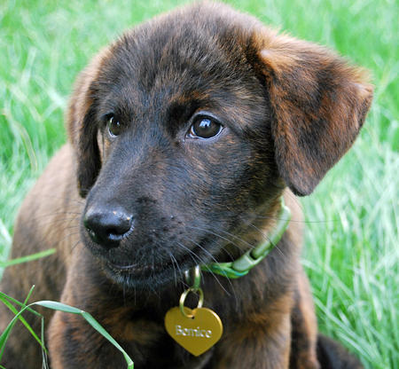 Bernice the Mixed Breed Pictures 889686
