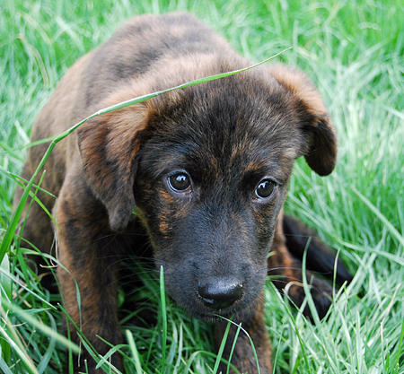 Bernice the Mixed Breed Pictures 889687