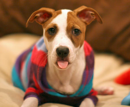 Bialy the Mixed Breed Pictures 989365