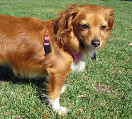 Biscuit the Mixed Breed Pictures 605390