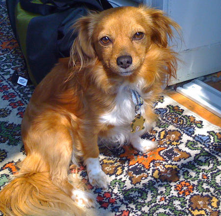 Biscuit the Mixed Breed Pictures 605391