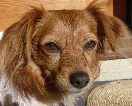 Biscuit the Mixed Breed Pictures 605387