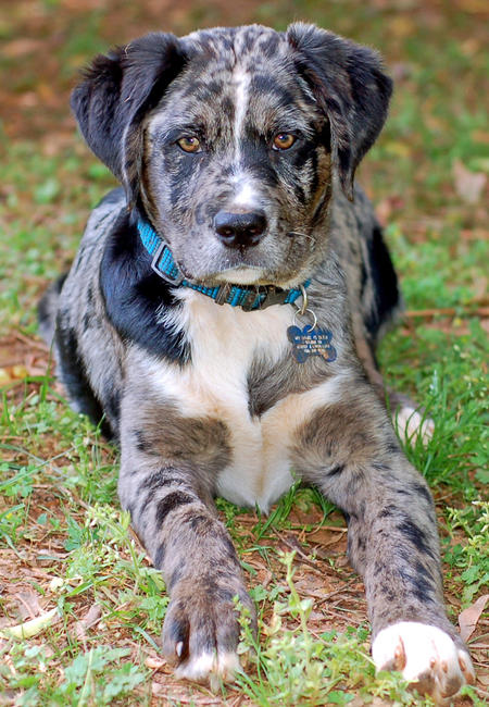 Bleu the Mixed Breed Pictures 887274