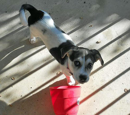 Bluebelle the Jack Russell Terrier Pictures 1046614