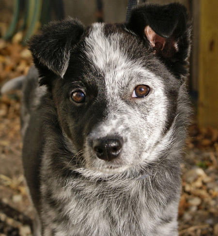 Bonzai the Mixed Breed Pictures 512245