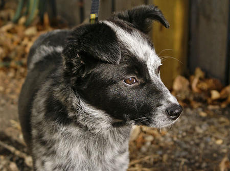 Bonzai the Mixed Breed Pictures 512246