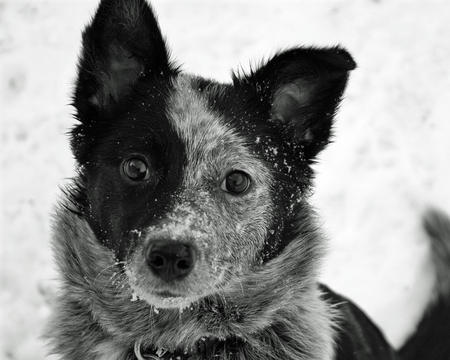 Bonzai the Mixed Breed Pictures 512248