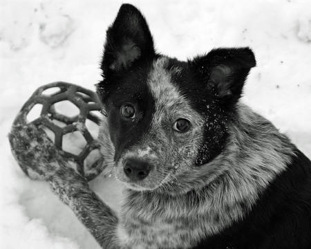 Bonzai the Mixed Breed Pictures 512250
