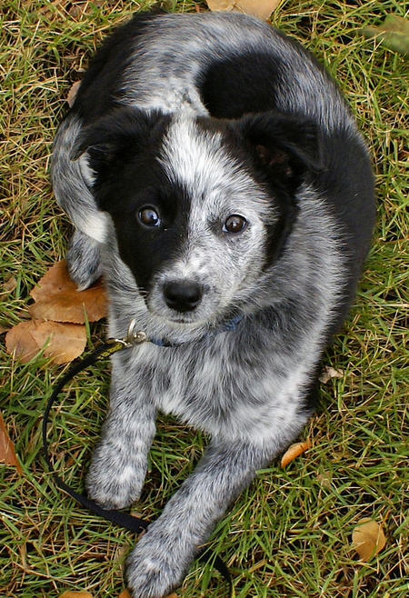 Bonzai the Mixed Breed Pictures 512241