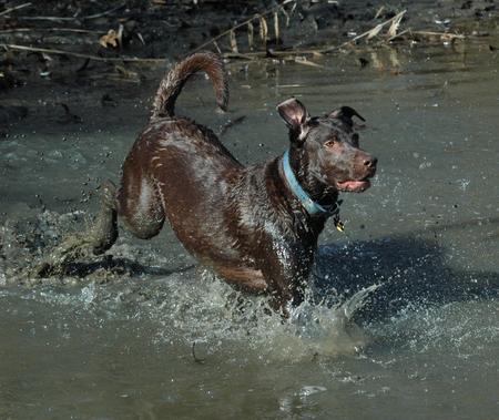 Briar the Labrador Retriever Mix Pictures 553182