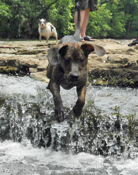 Bronco the Mixed Breed Pictures 932324
