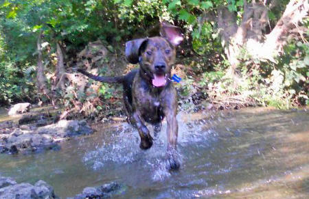 Bronco the Mixed Breed Pictures 932327