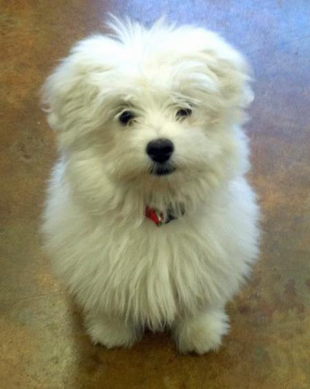 Bruce the Maltese Mix Pictures 850539