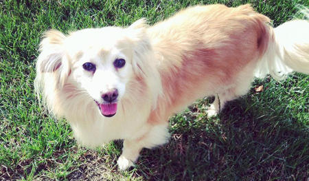 Buddy the Mixed Breed Pictures 1058246