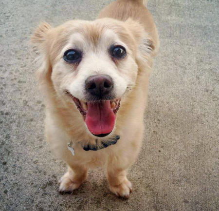 Buddy the Mixed Breed Pictures 1058247