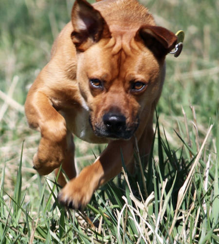 Bugsy the Puggle Pictures 947671