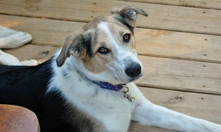 Cali the Mixed Breed Pictures 1033692