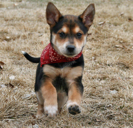 Cedar the Mixed Breed Pictures 550429