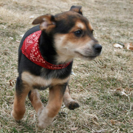 Cedar the Mixed Breed Pictures 550432