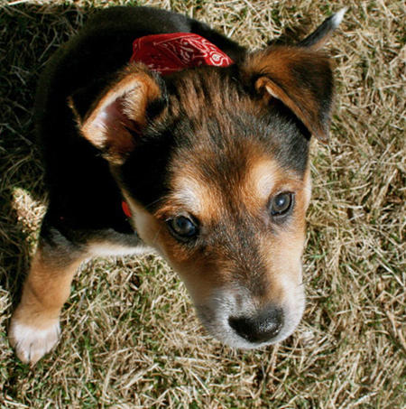 Cedar the Mixed Breed Pictures 550433