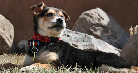 Cedar the Mixed Breed Pictures 550434