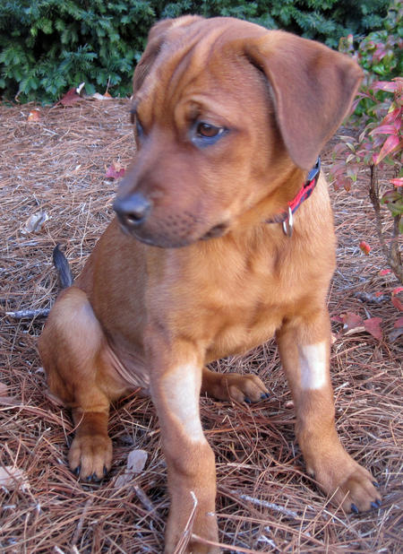 Chance the Mixed Breed Pictures 942216