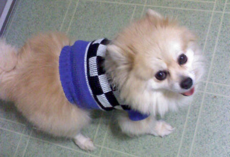 Chanel the Pomeranian Pictures 1051699