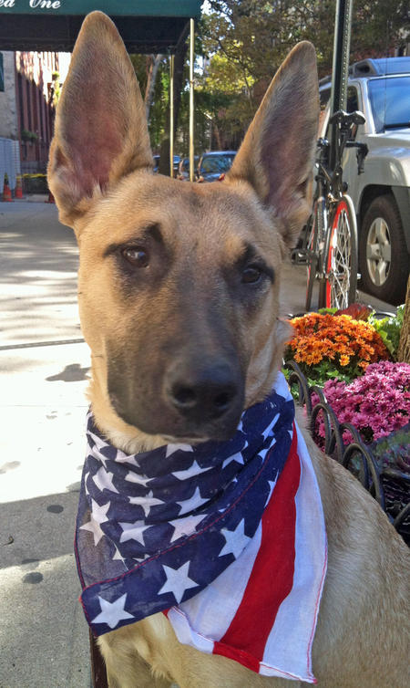 Charlie the Adoptable German Shepherd Mix Pictures 991556