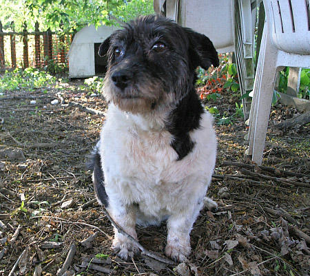 Charlotte the Mixed Breed Pictures 798959