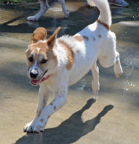 Cinnamon the Mixed Breed Pictures 1024711