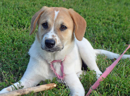 Cinnamon the Mixed Breed Pictures 1024713
