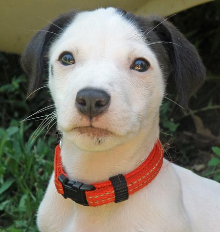 Cisco the Jack Russell Mix Pictures 821713